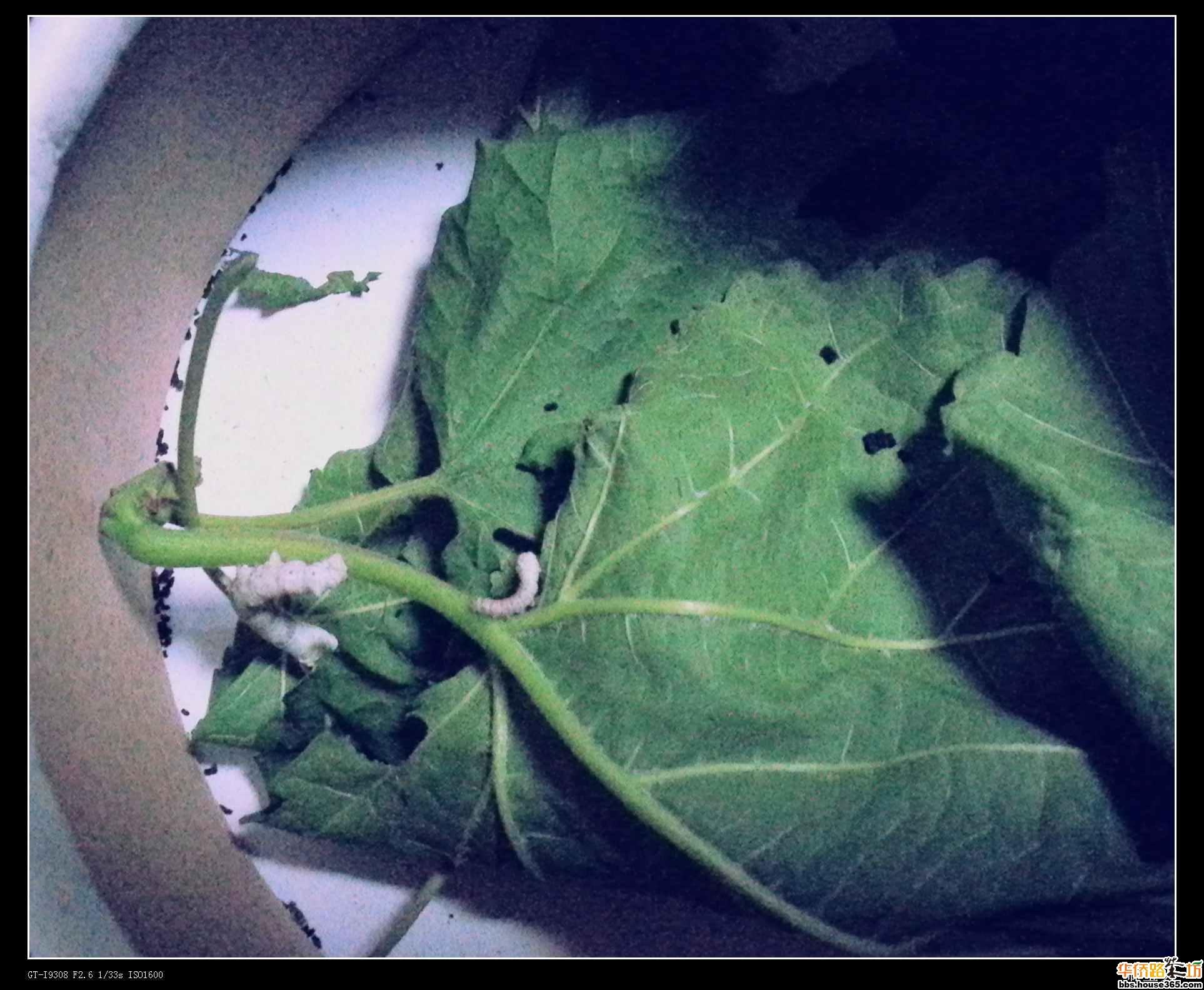我的小菜菜成长过程