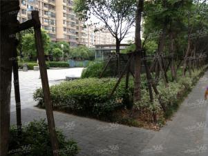 香江壹品实景图